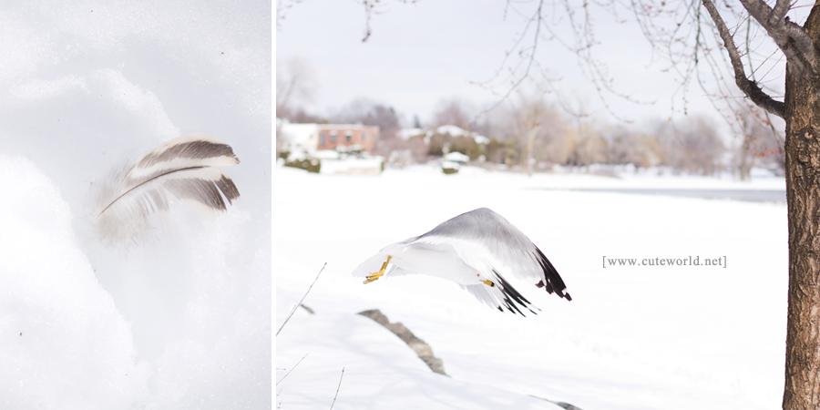 Photographie hiver parc