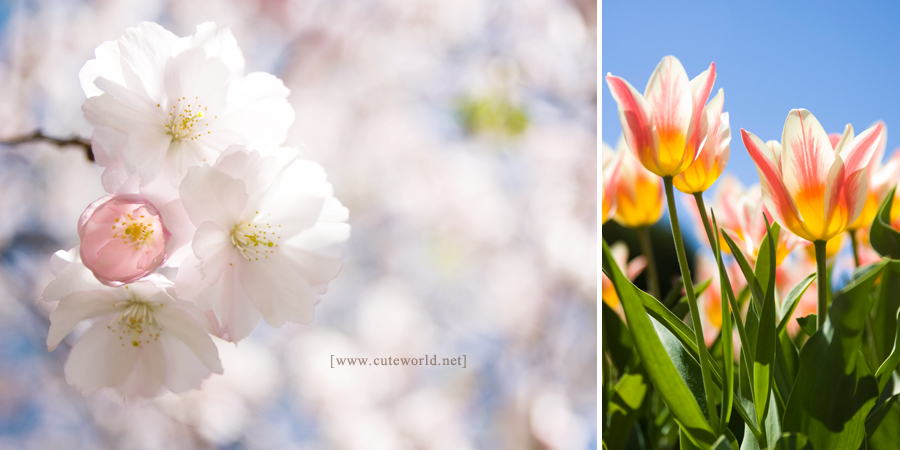 photographie-printemps-photo