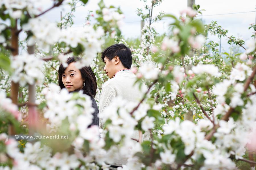 photographie couple amoureux dans un verger